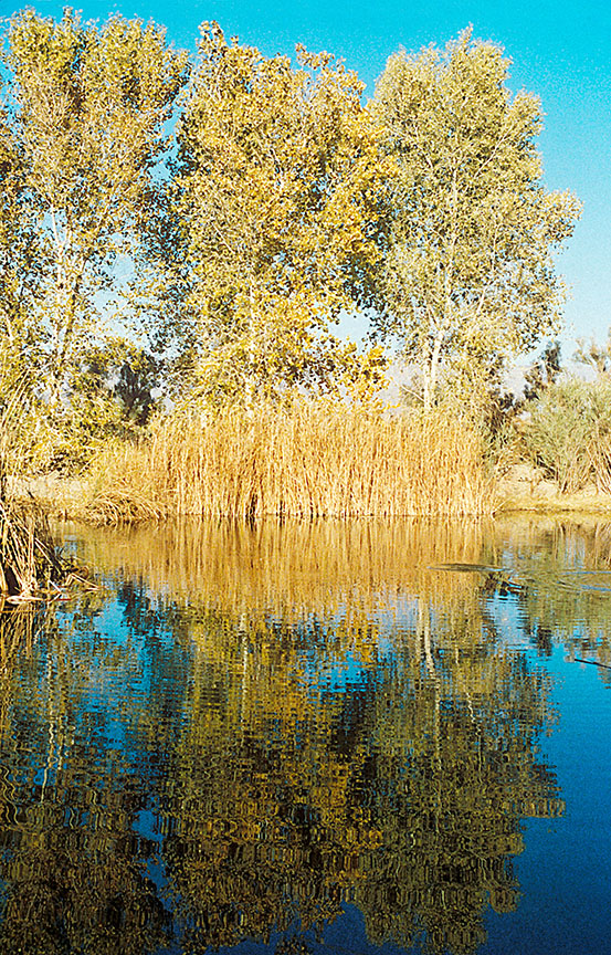 Mirrored_Trees_12_72.jpg