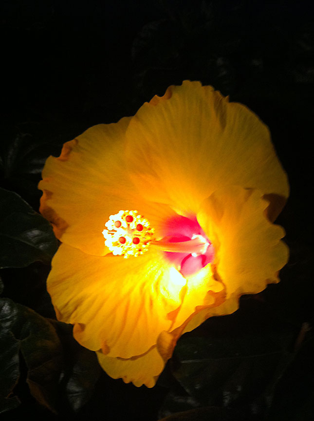 nite_flower_yellow_12_72.jpg